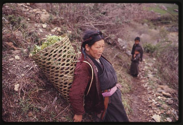 [Woman with basket of greens on her back, resting by side of road, Lachung, Sikkim]