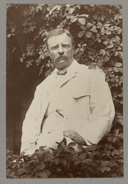 [Theodore Roosevelt, three-quarters length, facing front, seated on veranda surrounded by tree leaves]