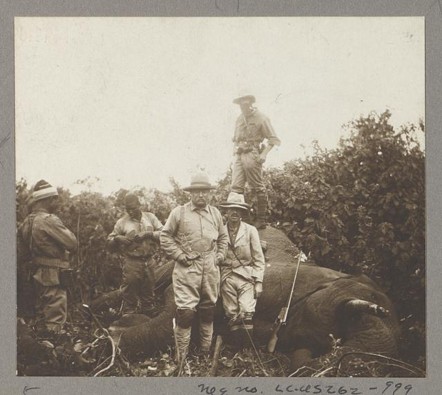 Col. Roosevelt & bull elephant shot at Meru
