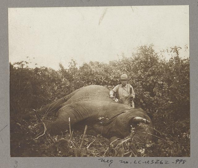 Col. Roosevelt and a bull elephant shot at Meru
