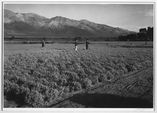 Guayle Field, Manzanar Relocation Center