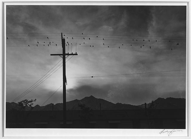 Birds on wire, evening, Manzanar Relocation Center