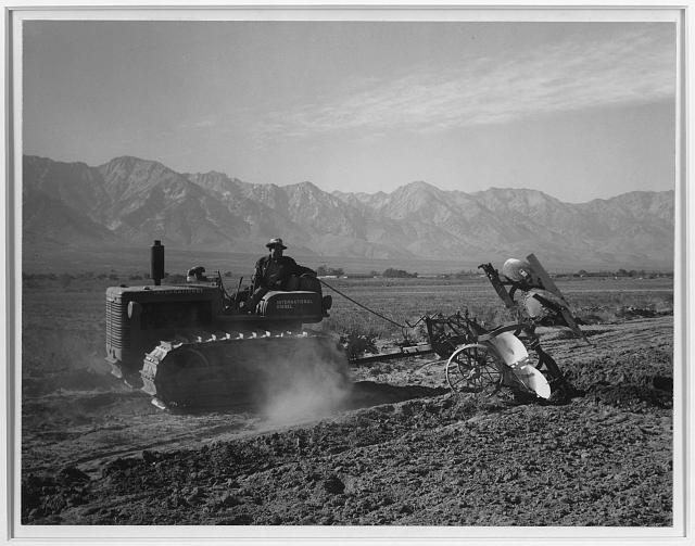 Benji Iguchi driving tractor, Manzanar Relocation Center, California