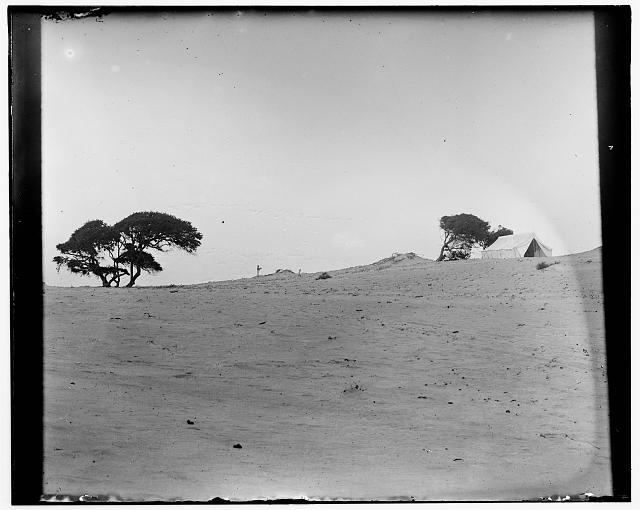 [The Wright brothers' camp near Kitty Hawk, taken from the north, two groups of trees to the left, side view of their tent to the right]