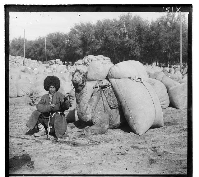 [Turkmen man posing with camel loaded with sacks, probably of grain or cotton, Central Asia]