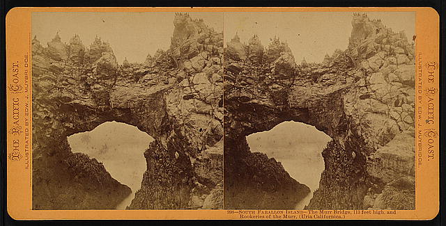 South Farallon Island - the Murr Bridge, 113 feet high, and rookeries of the Murr, (Uria Californica)