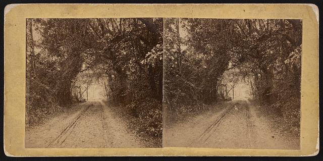 Public road on Ladies Island opposite Beaufort, S.C.,
