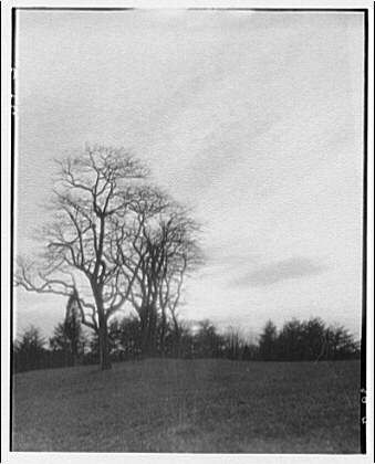 Landscapes. Bare trees in field
