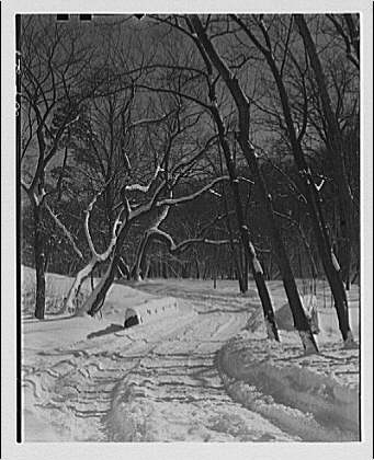 Winter scenes. View in Rock Creek Park showing roadway near zoo