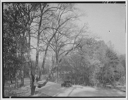 Mount Vernon Memorial Highway. Automobile in wooded area of Mount Vernon Highway