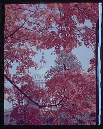 U.S. Capitol exteriors. U.S. Capitol with fall foliage in foreground, vertical