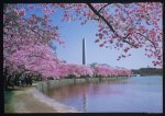 Theodor Horydczak, photographer. Views of Washington Monument, cherry blossoms and Tidal Basin III