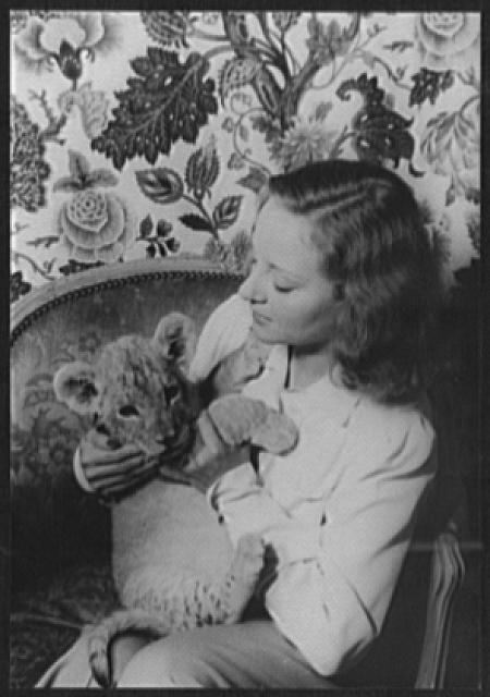 [Portrait of Tallulah Bankhead, with lion cub Winston Churchill]