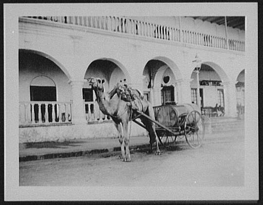 Camel-drawn water dealer's cart
