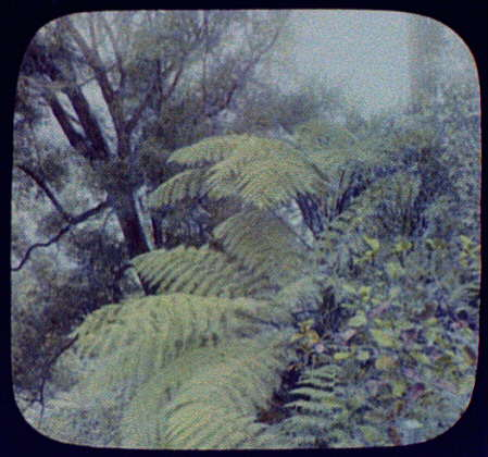 Large ferns beside railroad track